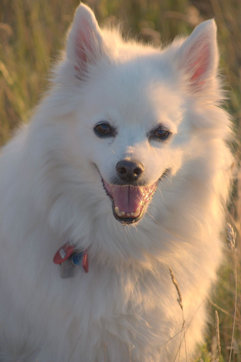 Treatment For Cushings Disease In Dogs