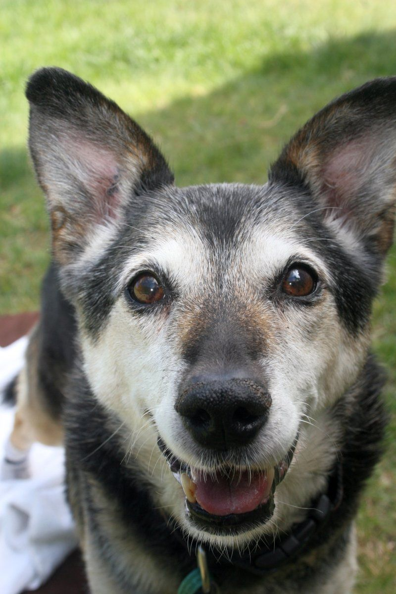 How to Help a Dog With Degenerative Myelopathy
